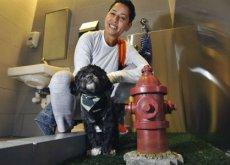 banheiros para animais de estimação em aeroportos