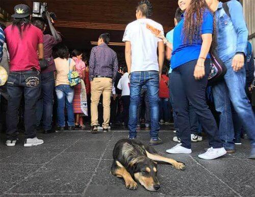 Centenas de cães são abandonados por fiéis em basílica