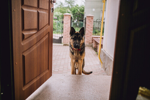 7 conselhos para donos cujos animais de estimação se comportam mal com as visitas