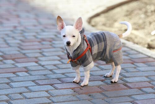 cuidar de seu cão no inverno