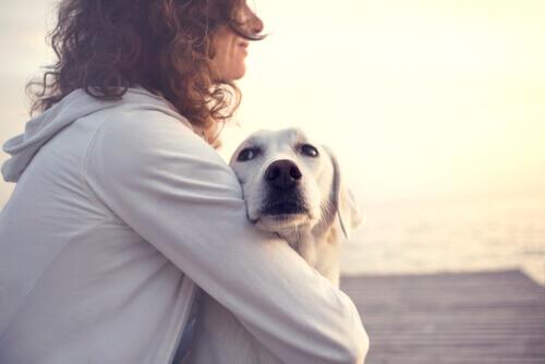 Os cães também podem detectar o diabetes