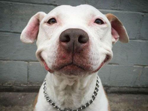 Brinsks, um cão que sorri desde que foi resgatado
