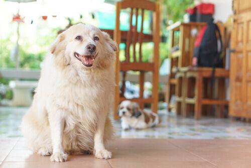 7 sinais de que seu cachorro sofre de artrite