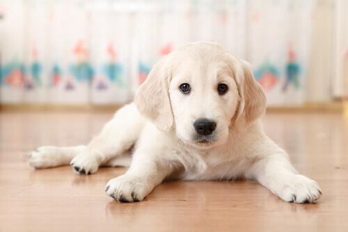 Saiba qual país dá licença quando você tem um novo cachorro em casa