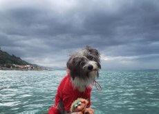 cadelinha marinheira