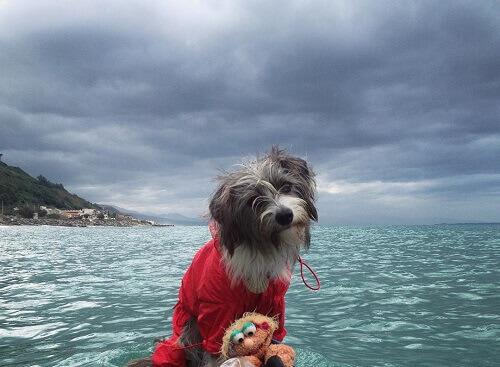 Conheça nirvana, a cadelinha marinheira