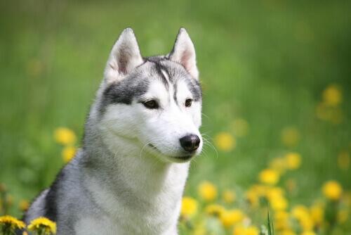 Resgate de uma cadelinha presa com fratura de quadril