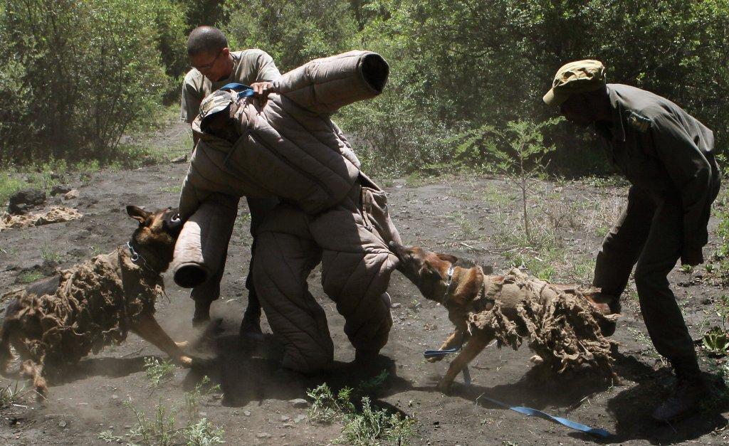 Os cães que combatem a caça ilegal na África