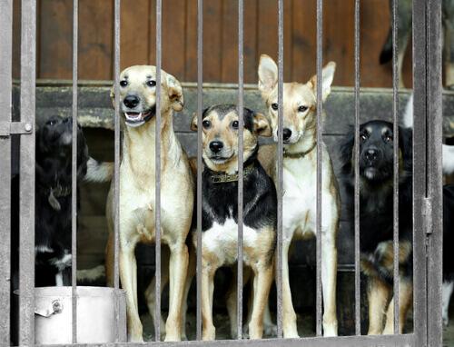 Coreia do Sul fecha o maior mercado de carne de cachorro
