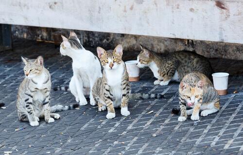 cidade dos gatos