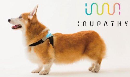 Uma coleira inteligente que pode dizer como seu cão se sente