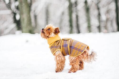 5 truques para que seu cão não passe frio no inverno