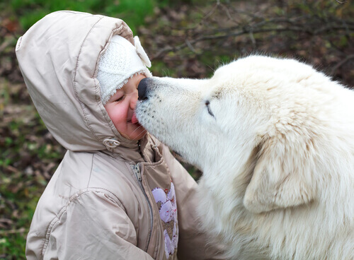 cão nos beije