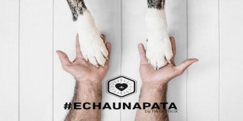 #Echaunapata, campanha no Instagram para animais abandonados