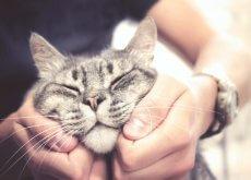 fazer carinho em um gato