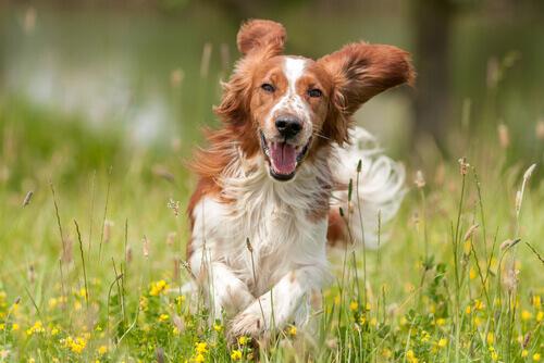 Regras para fazer com que o seu cão seja feliz