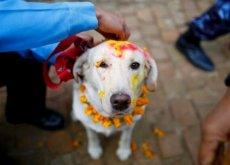 festividades para animais