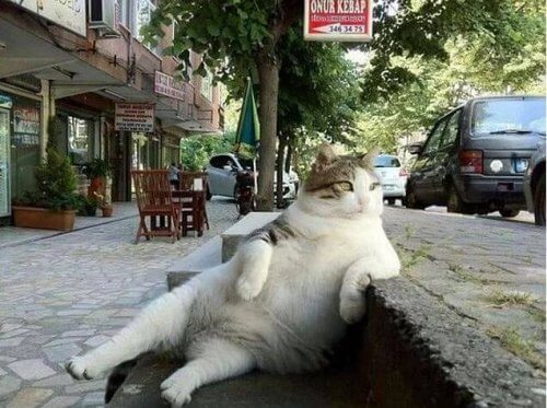 gata-famosa-que-tem-sua-estatua
