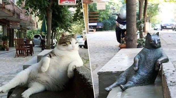 gata-famosa-tem-sua-estatua-2