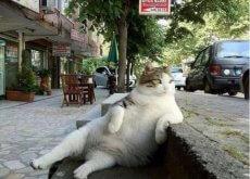 gata famosa
