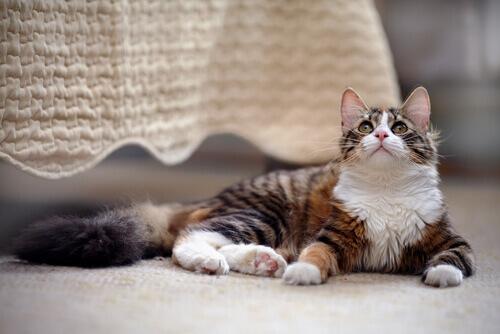 um gato em casa