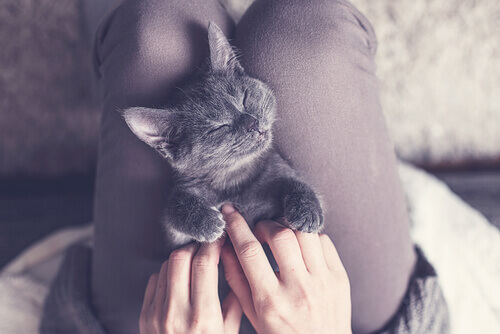 gato-gosta-dormir