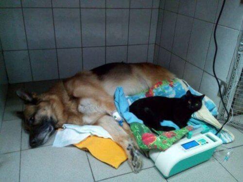 Lúcifer, um gato paralítico que ajuda a outros