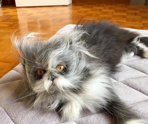 gato-ou-cao-1