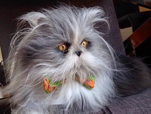 Gato ou cão? Adivinhe o que é esta criatura