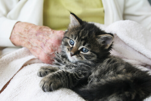 gato-pessoa-idosa