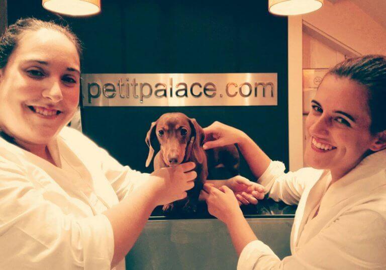 hotel-para-caes-e-gatos-2-e1482688942573