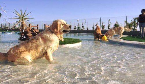Em Tenerife, foi inaugurado o hotel para cães e gatos mais luxuoso da Europa
