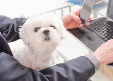 levar-cachorro-ao-trabalho