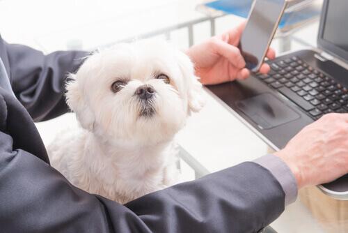 Universidades Petfriendly: leve seu cão ao trabalho