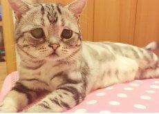 lulu-a-gatinha-de-cara-triste
