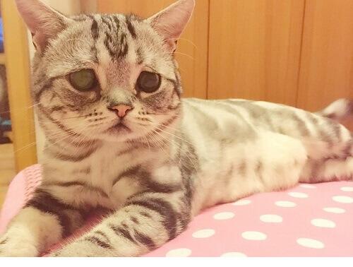 Apresentamos a você Luhu, a gatinha de cara triste