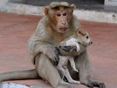 O macaco que adotou um cão de rua