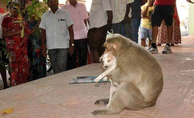 macaco-adota-cao-orfao