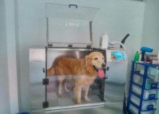 máquinas de lavar cães
