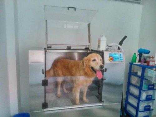 Como funcionam as máquinas de lavar cães