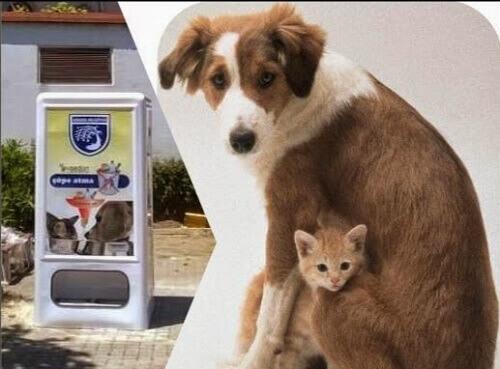 Já existe uma máquina distribuidora de ração na Espanha