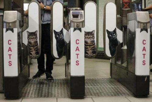 Metrô de Londres tira as propagandas e coloca fotos de gatos