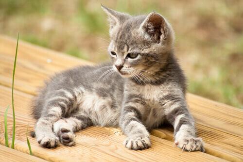 14 nomes criativos para o seu gato