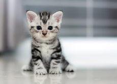 gatos crescem