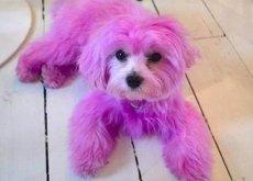 pintar-um-cao-de-rosa