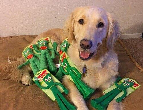 Reação de um cachorro quando vê seu dono vestido de seu brinquedo favorito
