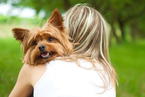 seu cão te ama loucamente