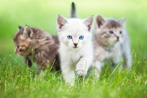 Sabe por que seu gato se parece tanto com você?