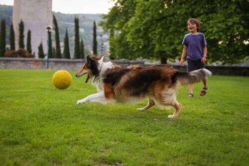 10 raças de cães para pessoas que têm filhos