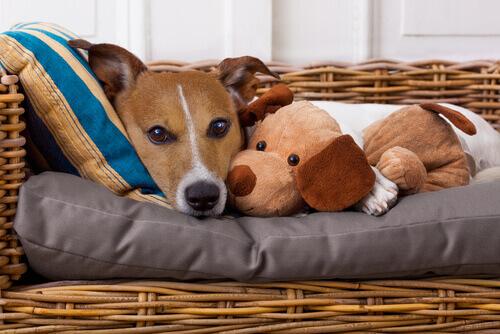 Sabia que nós também podemos transmitir doenças aos nossos animais?